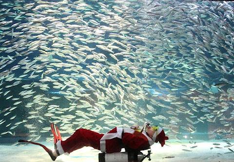 В ожидании новогодних подарков